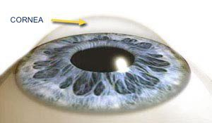 cornea with normal curvature